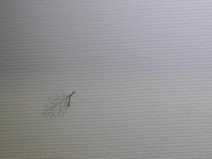 1783)①「日常の冒険 -日本の若手作家たち-(今村遼佑の場合) vol.3」 500m美術館 5月12日(土)~7月27日(金)_f0126829_1025344.jpg