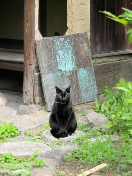 庭に黒い壺があらわれたぁ〜_b0173241_9143013.jpg