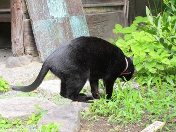 庭に黒い壺があらわれたぁ〜_b0173241_9162740.jpg