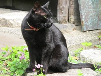 庭に黒い壺があらわれたぁ〜_b0173241_9162825.jpg
