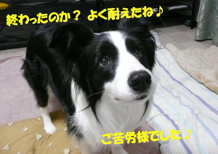 c0147241_2034827.jpg
