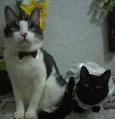 猫ウェディングまとめ☆_f0108346_232279.jpg