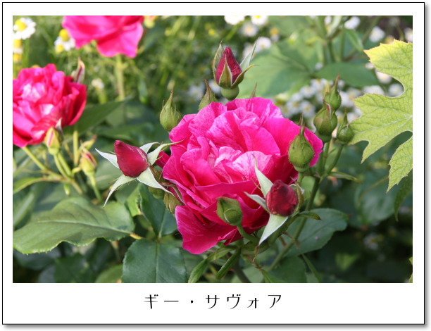 b0066947_14151380.jpg