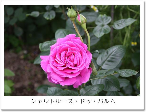 b0066947_14154297.jpg
