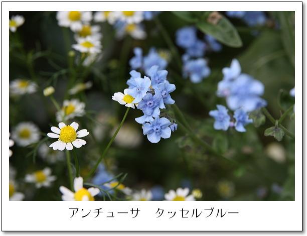 b0066947_1416338.jpg