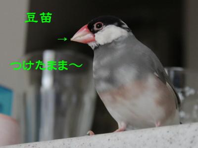 b0158061_19371060.jpg