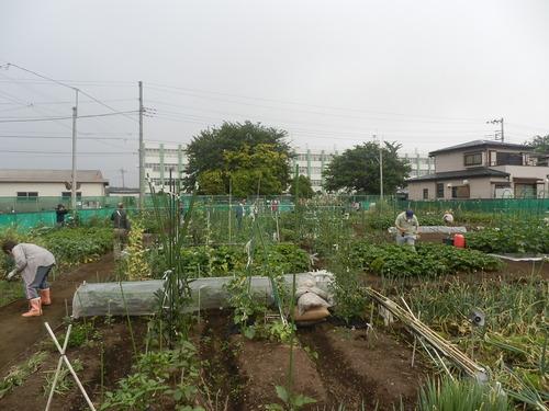 今日は市民農園の清掃の日です。_c0053863_13333085.jpg