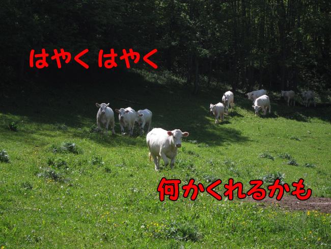 f0068385_22395752.jpg