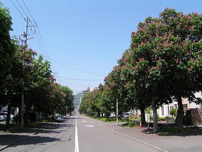 北4条街路樹のとちのき_f0078286_20584673.jpg