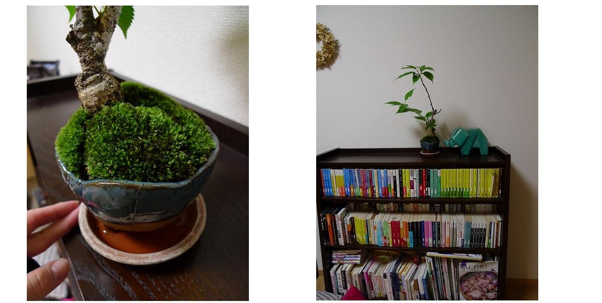 割った盆栽の植え替え。_a0188798_19501032.jpg