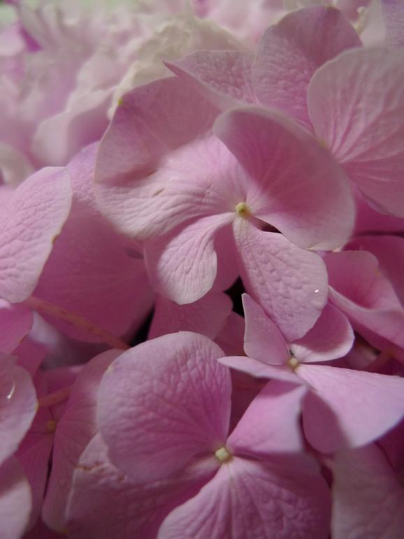 table flower !!!!_a0188798_22124281.jpg