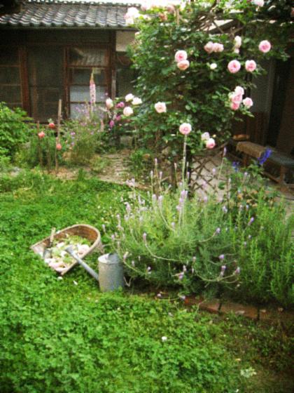 庭中の花を大きな花束にして…_d0077603_11463686.jpg
