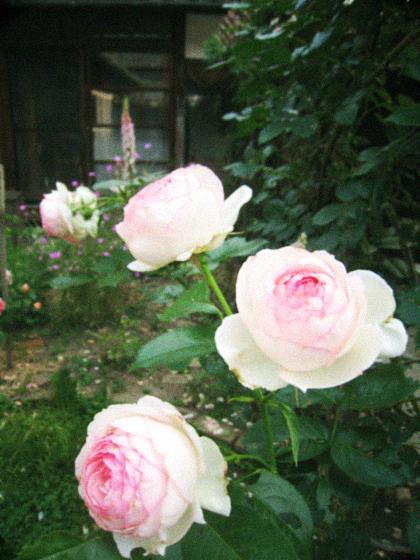 庭中の花を大きな花束にして…_d0077603_11465310.jpg