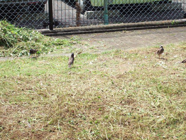 鳥は目がいい_f0108604_17182462.jpg