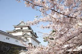 和歌山県の家庭教師個人契約_e0192724_17193347.jpg