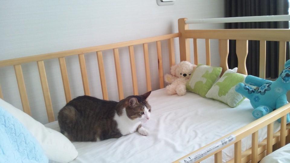 寝床問題解決!_e0253026_922673.jpg