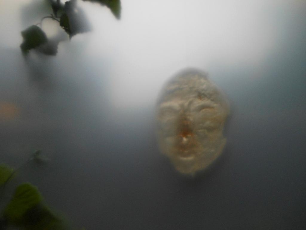 1785) 「梅田マサノリ 『記憶を探す通路』」 門馬 6月1日(金)~6月13日(水)  _f0126829_15401582.jpg