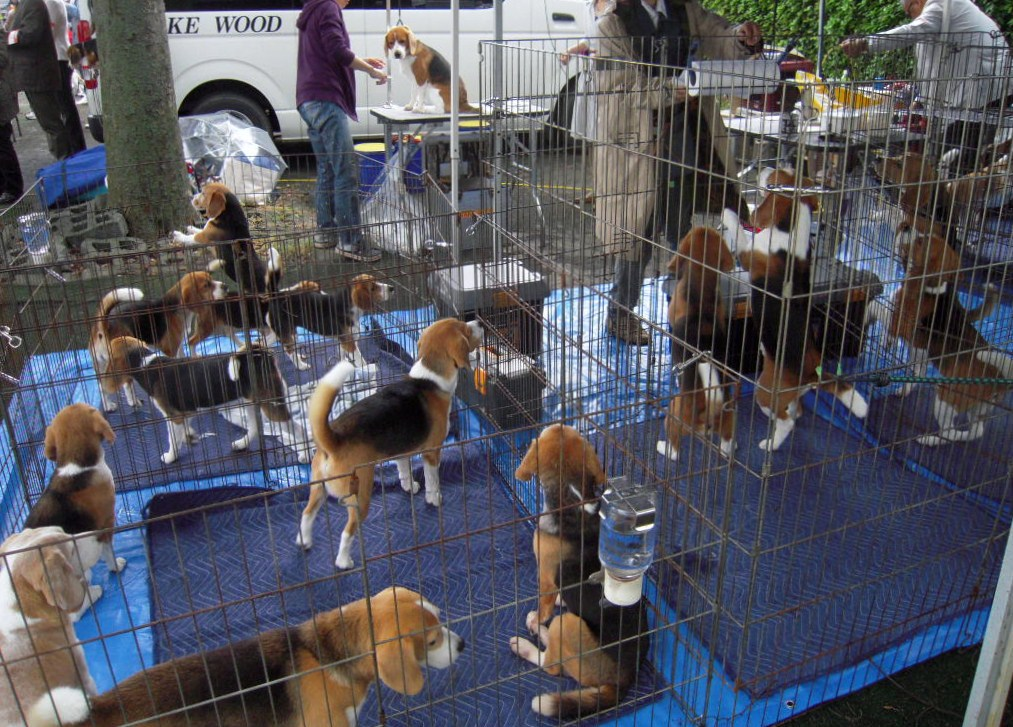 Full of beagle dogs  1_b0005652_15213433.jpg