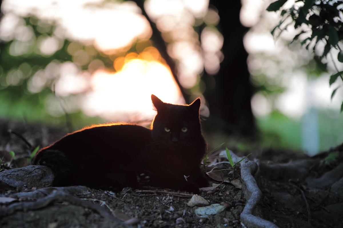猫にゃん_f0021869_23214763.jpg