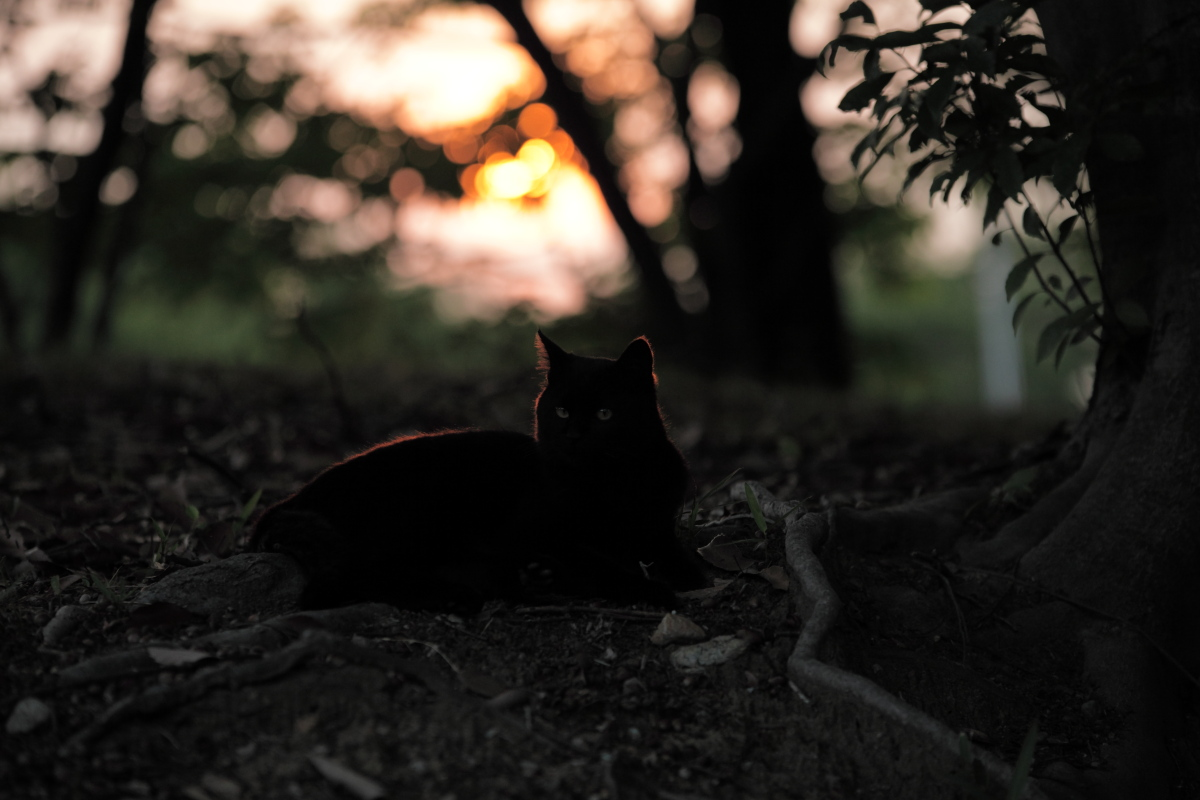 猫にゃん_f0021869_23222558.jpg