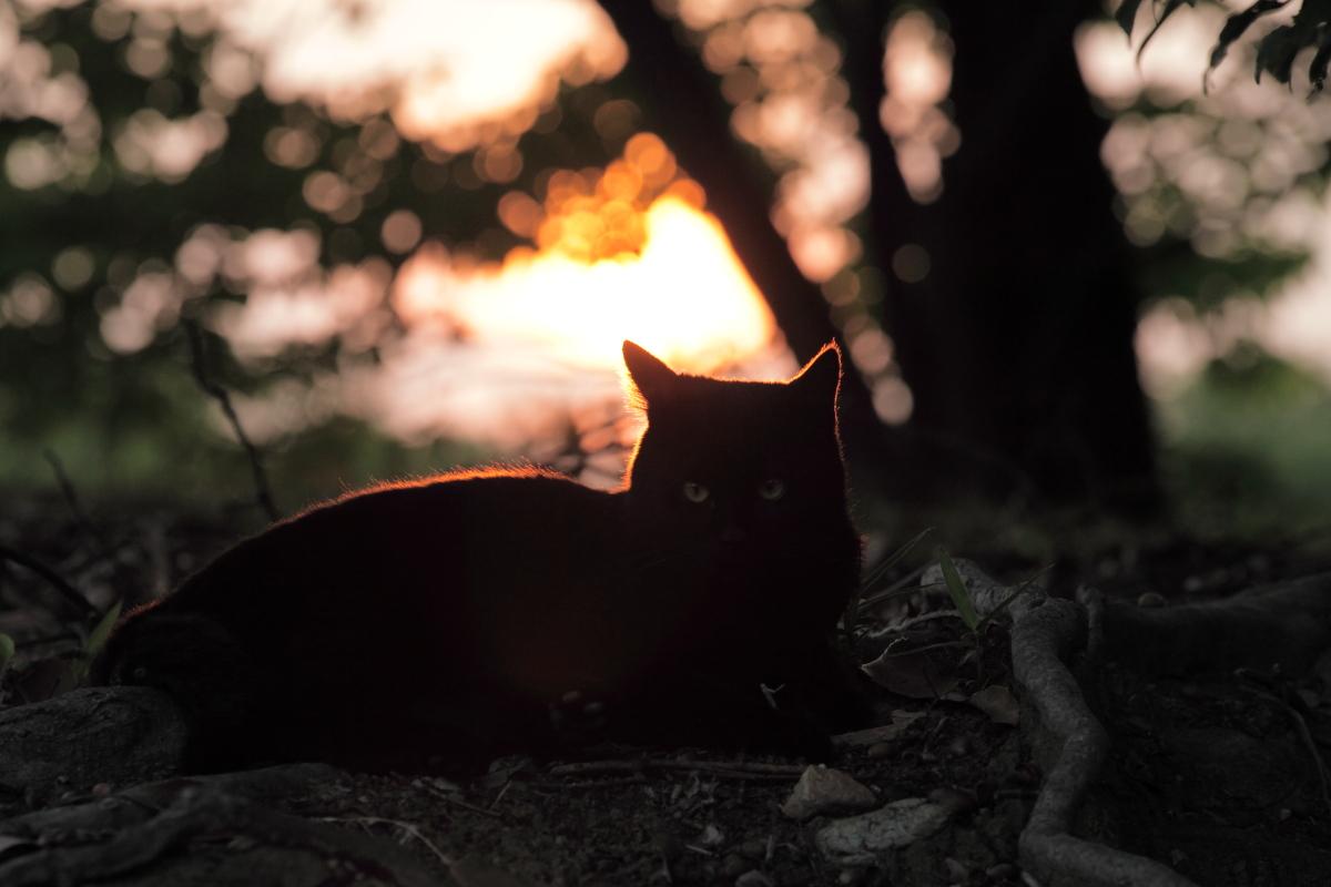 猫にゃん_f0021869_232335.jpg