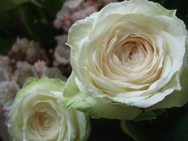 オークリーフ(薔薇・イノセントと白いカルミアのアレンジメント)_f0049672_1811044.jpg