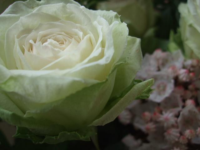 オークリーフ(薔薇・イノセントと白いカルミアのアレンジメント)_f0049672_181174.jpg
