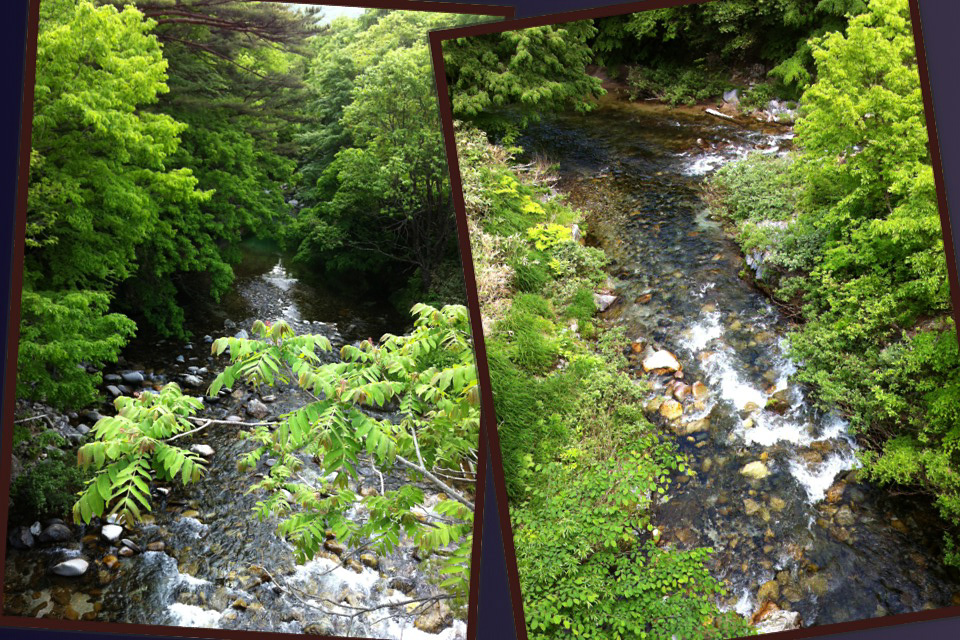 渓流の新緑_c0048494_916042.jpg
