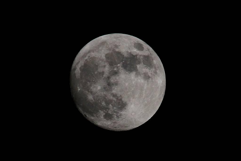 公園のアオゲラ/白い菖蒲に赤トンボ/月食前夜の月_b0024798_11135815.jpg