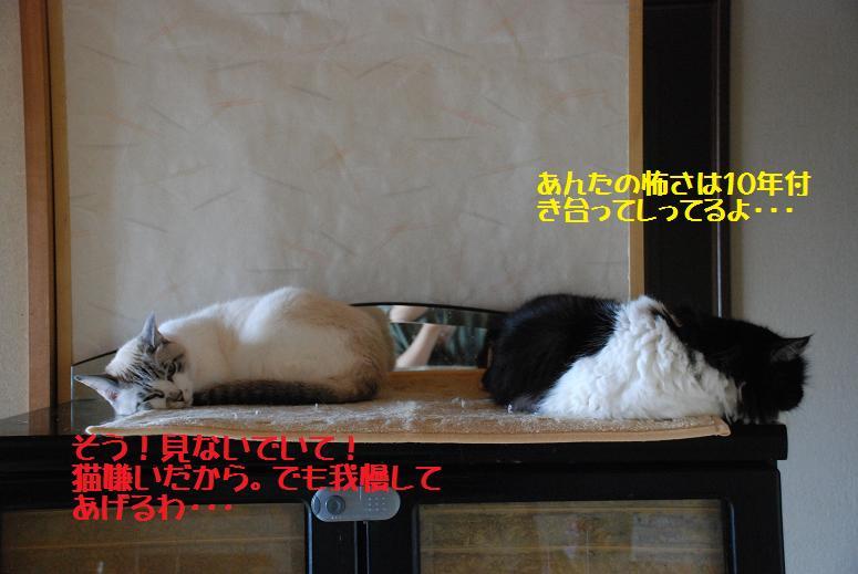 b0173101_23243389.jpg