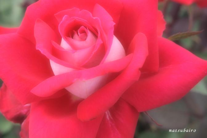 e0205227_20125934.jpg