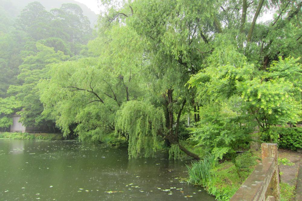 雨の湯布院・金鱗湖(きんりんこ)_a0107574_19473988.jpg