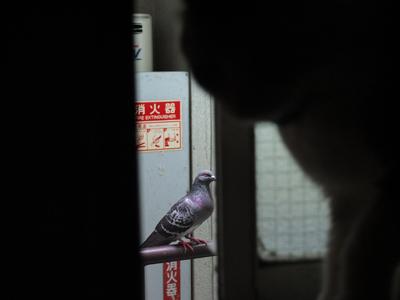 DAY OFF:花鳥風猫_a0180681_13364342.jpg