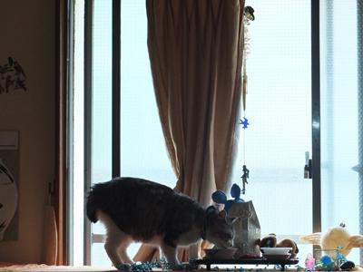 DAY OFF:花鳥風猫_a0180681_21222468.jpg