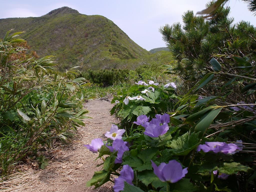 6月5日、徳舜瞥山とホロホロ山_f0138096_23351455.jpg