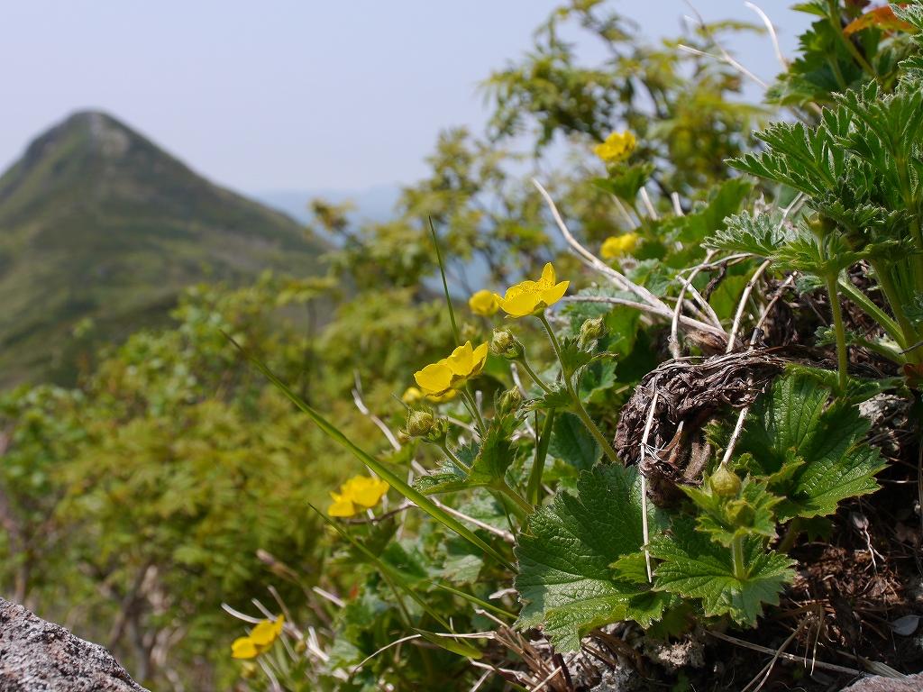 6月5日、徳舜瞥山とホロホロ山_f0138096_23362955.jpg