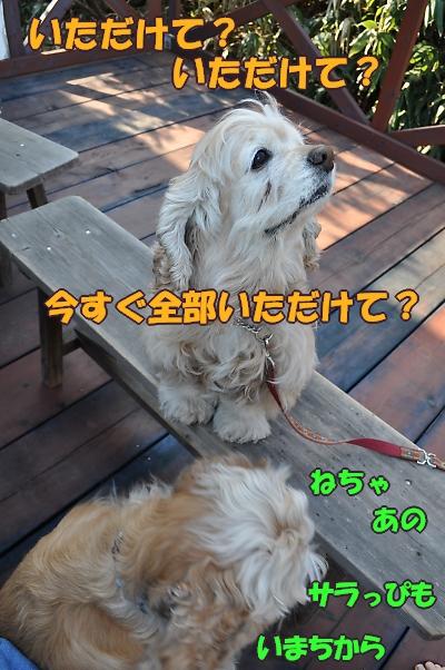 b0067012_025563.jpg