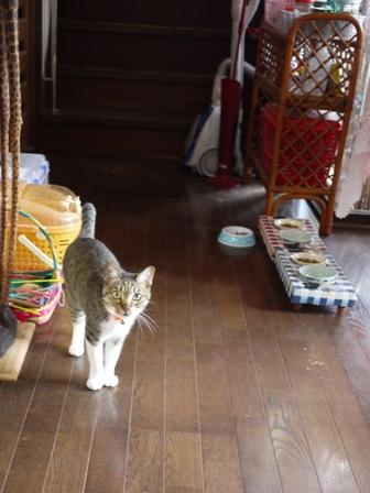 猫のお友だち メイちゃんポポちゃんゴロくん編。_a0143140_18111326.jpg