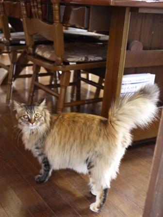 猫のお友だち メイちゃんポポちゃんゴロくん編。_a0143140_18123542.jpg