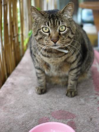 猫のお友だち メイちゃんポポちゃんゴロくん編。_a0143140_18153236.jpg