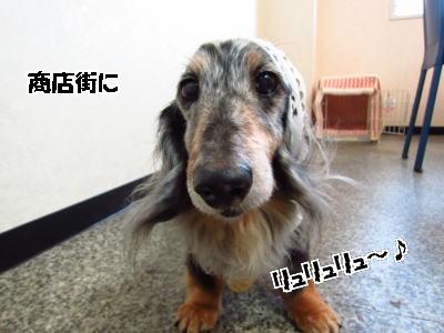 d0020869_15291784.jpg