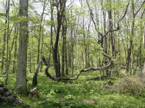 アファンの森体験記_b0172896_17421619.jpg