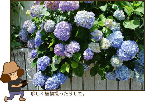 d0212419_19552293.jpg