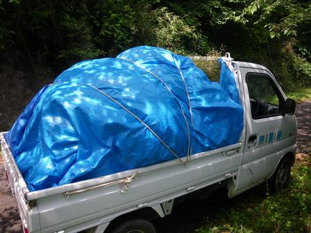 6月7日。セイヨウアブラナの刈り取りを行いました_a0123836_14423015.jpg
