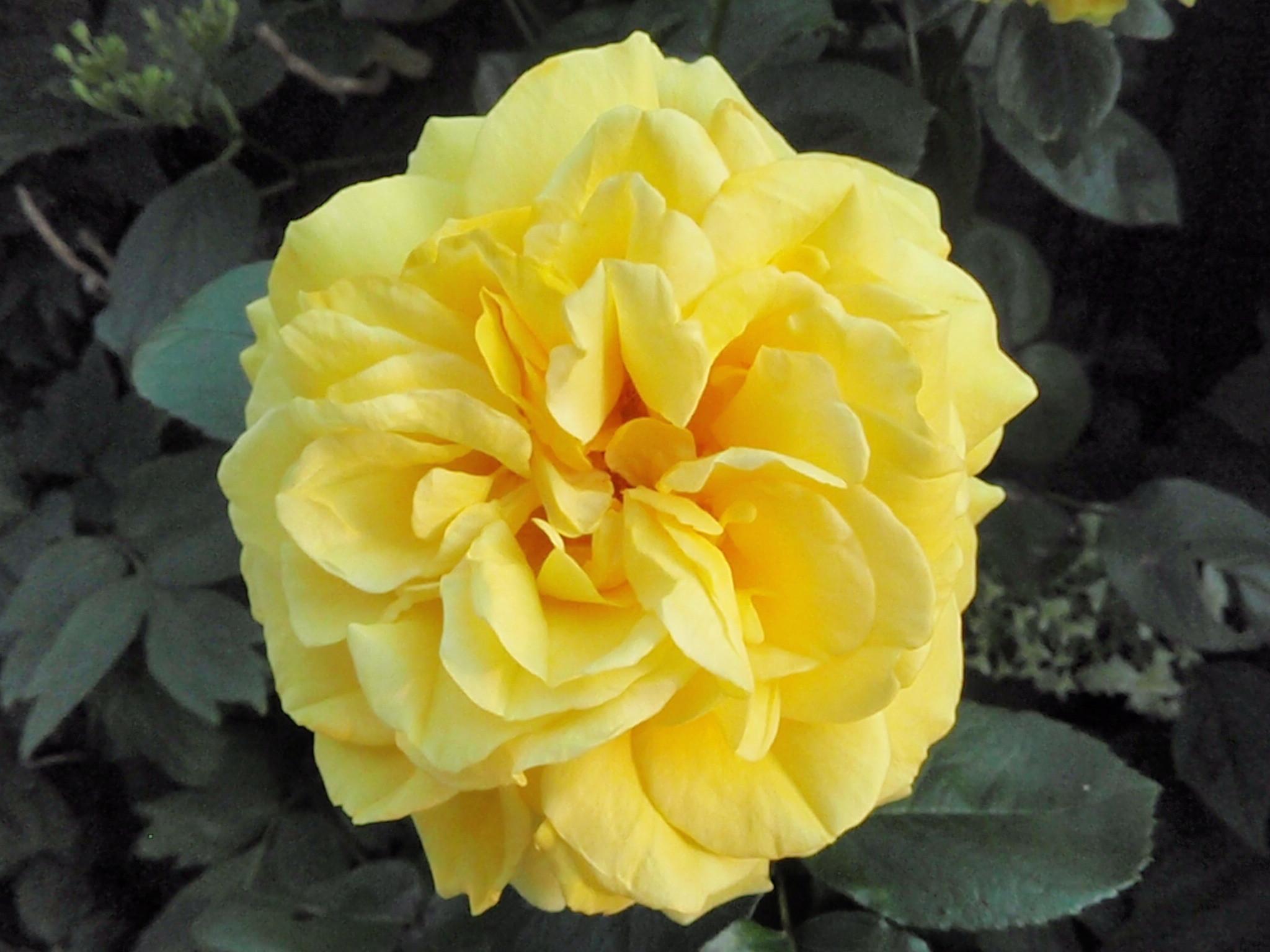 花便り_a0207196_20251777.jpg