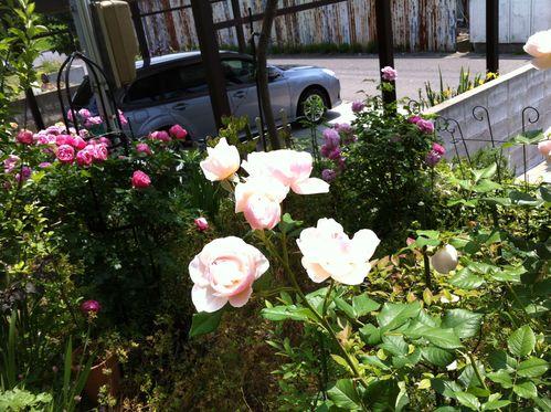 バラ園のようなサロンへ_a0126418_22215017.jpg