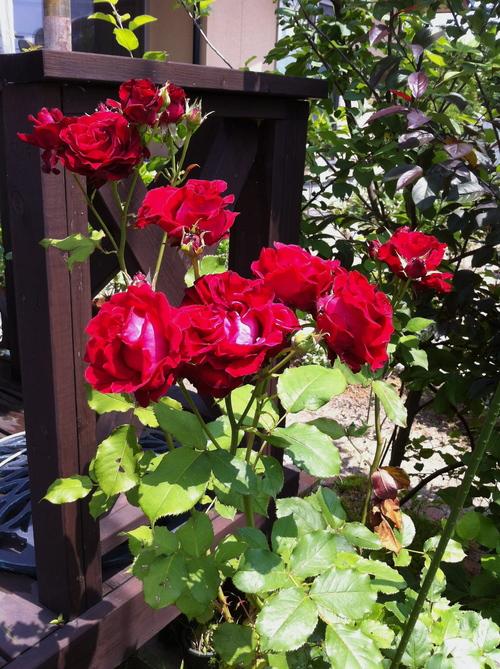 バラ園のようなサロンへ_a0126418_22343098.jpg