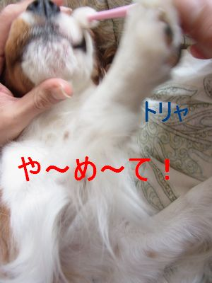 f0214121_1952137.jpg