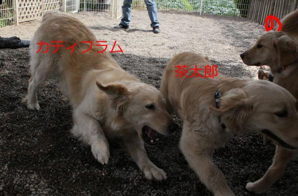 f0203423_2002360.jpg