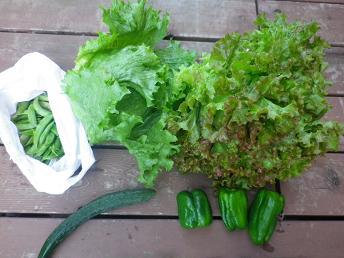 朝採り野菜_a0139242_5181281.jpg